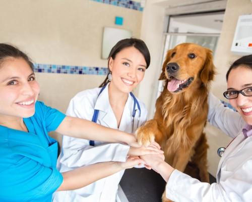 Curso de Auxiliar de Medicina Veterinária