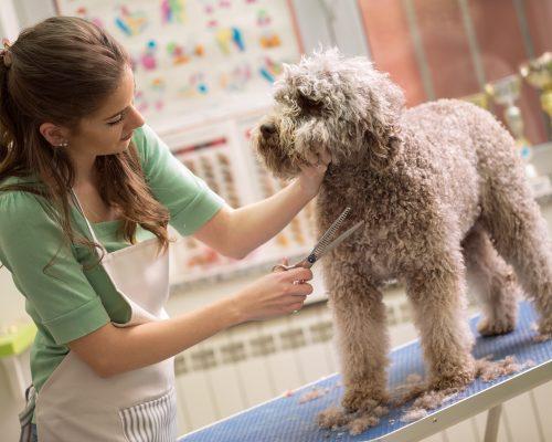 Curso de Estética Canina e Felina